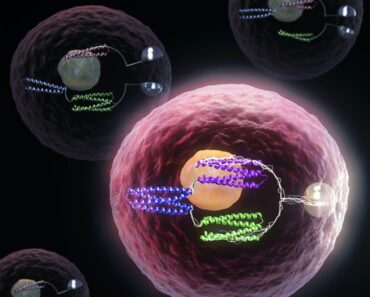 Artificial proteins function as logic gates transform cells into computers